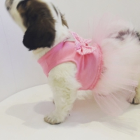 Dogi & Dog & Dog Prenses