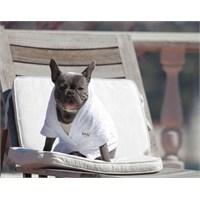 Wuufbox Köpek Bornozu M Beyaz