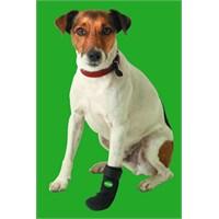 Karlie Koruyucu Köpek Ayakkabısı Tappıes - Medium