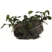 Dekor Bitkili Fıçı (13,5x8x9)