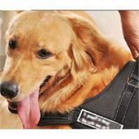 Buffer Köpek Sırt Tasması Sports Dog