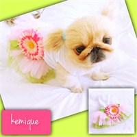 Kemique Flower Tütülü Elbise