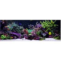 Reeflowers Tuzlu su Akvaryumları Sertifikalı Uzmanlık Eğitimi