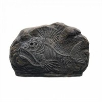 Hagen Marina Dekoratif Fosil Tiger Fish