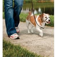 Easy Walk™ Headcollar - Small Siyah Köpek Tasması