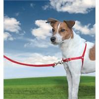 Easy Walk™ Harness - Medium Kırmızı Köpek Tasması