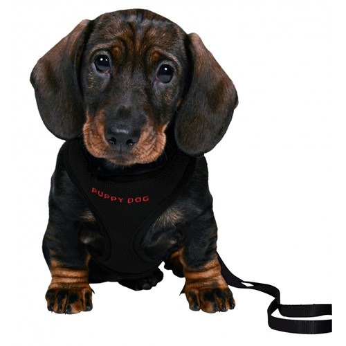 Trixie Yavru Köpek Göğ.Tasma&Kyışı,26-34Cm/2M/10Mm