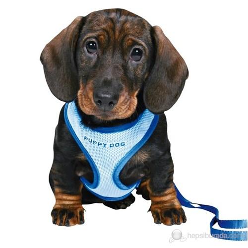 Puppy Dog Göğüs Tasma Seti ve Gezdirme Kayışı 23-34cm/2m/10mm