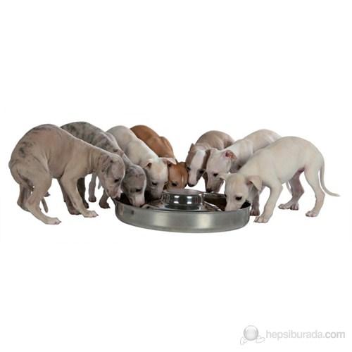Yavru Köpek İçin Çelik Mama ve Su Kabı 1400ml 29 cm