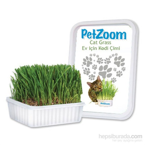 Pet Zoom Kedi Çimi Küçük Boy
