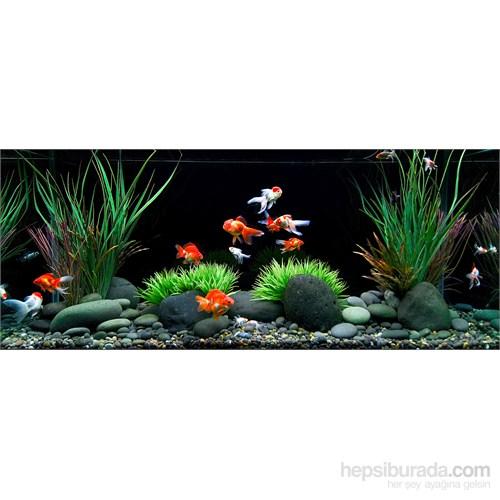 Reeflowers Akvaryum Hobisine Giriş Eğitimi
