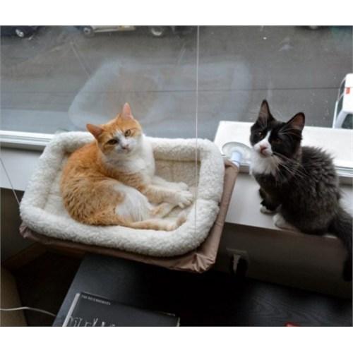 Buffer Sunny Seat Cama Asılan Kedi Yatağı