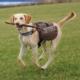Trixie Köpek Sirt Çantası M-L:27X16 Cm Kahve - Mavi