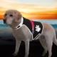 Trixie Köpek Işikli Fosforlu Güvenlik Yeleği M,Siyah