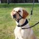 Trixie Top Trainer Uzman Köpek Eğitim Tasması XS 15 Cm