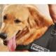 Hergunyeni Köpek Sırt Tasması Sports Dog