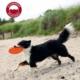 Georplast Yüzen Frizbi Köpek Eğitim Oyuncaği 18 Cm