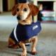 Thundershirt Sakinleştirici Köpek Giysisi Mavi XXS