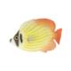 Euro Flora Balık 20X4X13 Cm