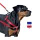 Bundera Köpekler İçin Bel Tipi Tasma