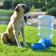 Vixpet Damacana Kedi Köpek Suluğu 19 Litre