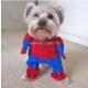 Patiland Spiderman Kedi/Köpek Kostümü