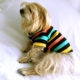 Raınbow Köpek Gömleği - By Kemique