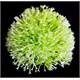 Top Şekilli Plastik Bitki 10Cm Yeşil