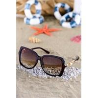 Silvio Monetti Kadın Güneş Gözlüğü Sm-1538R002