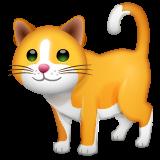 Cat on WhatsApp 2.20.206.24